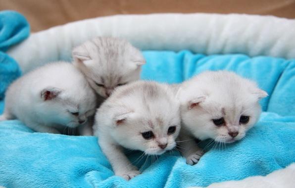 Картинка кошка, кот, любовь, кошки, коты