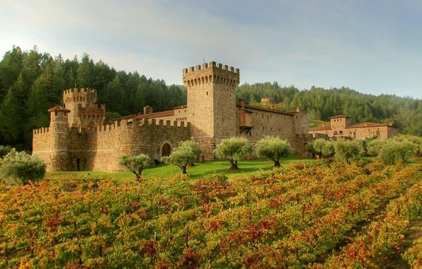 Картинка поле, лес, трава, деревья, замок, Италия, крепость, плантация, Tuscany, Castello di Amorosa