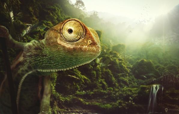 Картинка природа, хамелеон, животное, desktopography, chameleon