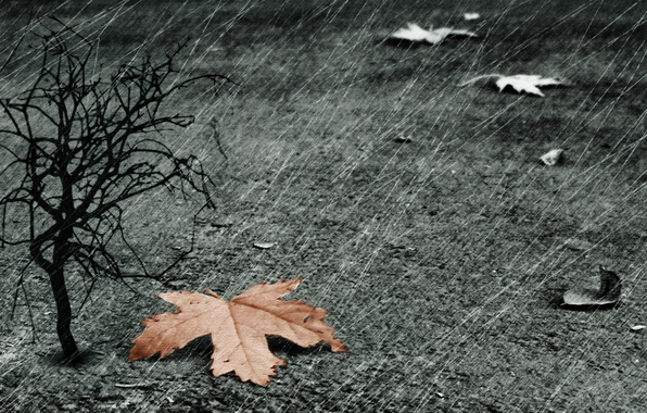 Картинка лист, дождь, дерево