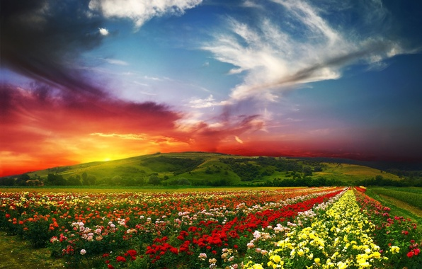 Картинка лето, солнце, облака, пейзаж, цветы, природа, краски, розы, долина, горизонт, nature, scenery, Beautiful landscape, horizon, ...