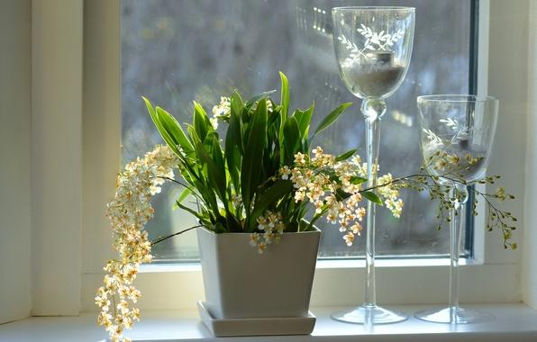 Картинка цветы, окно, подоконник, орхидеи, подсвечники, кашпо