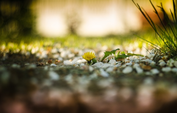 Картинка зелень, трава, весна