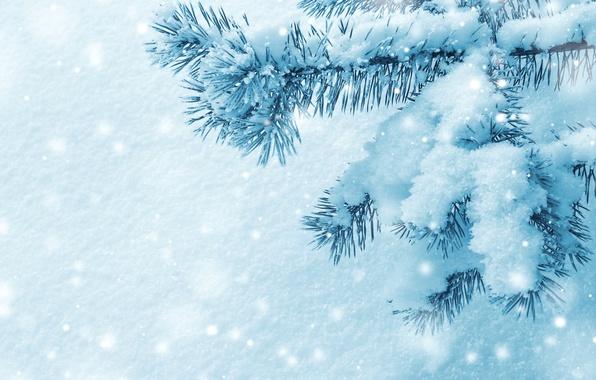 Картинка зима, макро, снег, иголки, ветки, природа, дерево, елка, ель