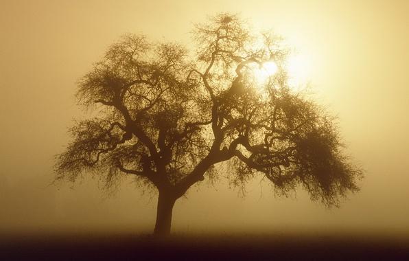 Картинка солнце, туман, дерево, сепия