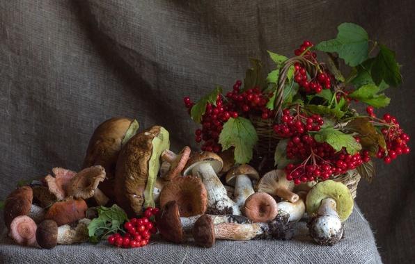 Картинка осень, ягоды, грибы, калина