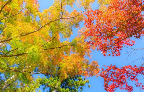 Фото обои небо, деревья, ветки, осень, листья, багрянец