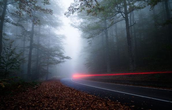 Картинка дорога, лес, свет, природа, туман, вечер, выдержка, дымка