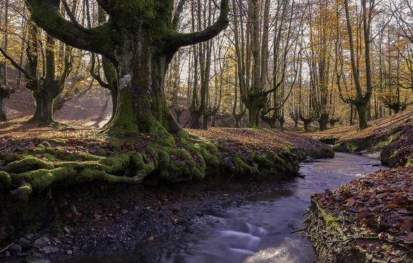 Картинка осень, лес, листья, солнце, деревья, парк, ручей, мох, Испания, Бискайя, Алава, страна Басков, Gorbea Natural ...