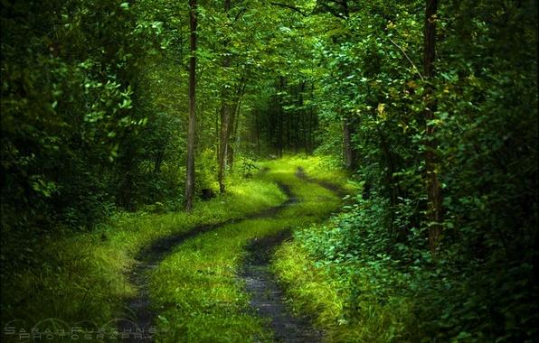 Картинка дорога, лес, свет, деревья, свежесть, природа, зеленый, настроение, листва, спокойствие, таинственный