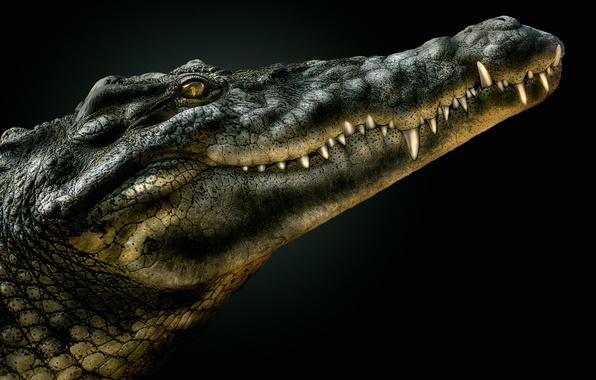 Картинка крокодил, пасть, аллигатор