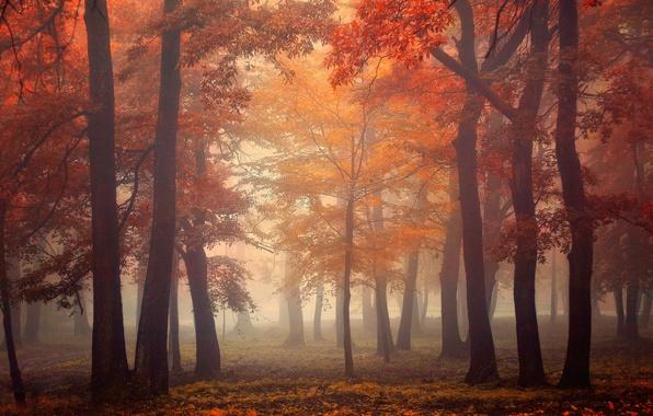 Картинка осень, лес, листья, свет, деревья, туман, light, forest, trees, autumn, leaves, fog