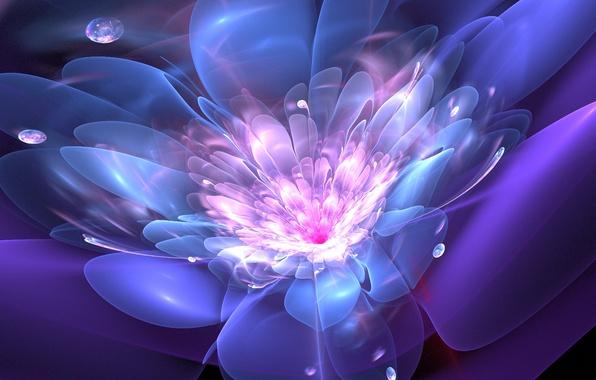 Картинка цветок, капли, линии, абстракция, графика, фрактал