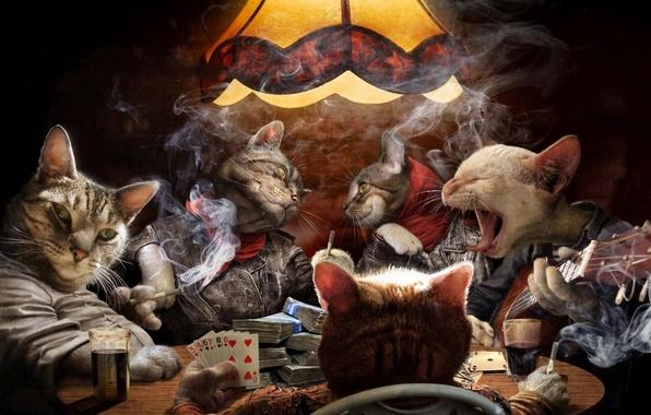 Картинка карты, кошки, дым, гитара, деньги, сигареты