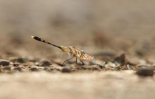 Картинка блики, фон, крылья, стрекоза, насекомое