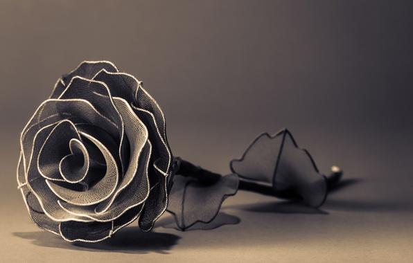 Картинка цветы, фон, widescreen, черно-белый, обои, роза, лепестки, wallpaper, широкоформатные, background, полноэкранные, HD wallpapers, цветочек, широкоэкранные, …