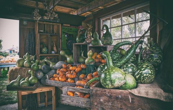 Картинка урожай, тыквы, рынок, ферма