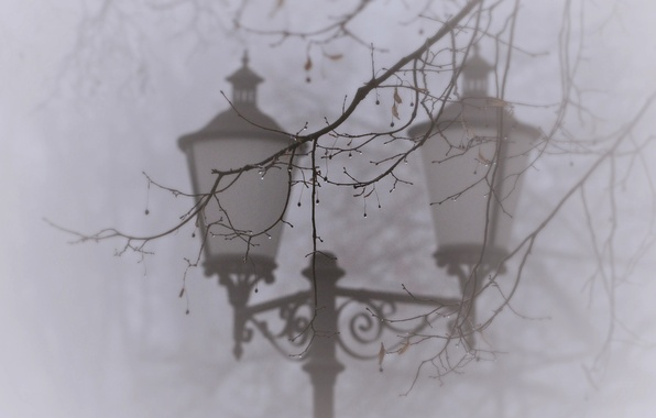Картинка капли, макро, природа, туман, дерево, ветка, фонарь