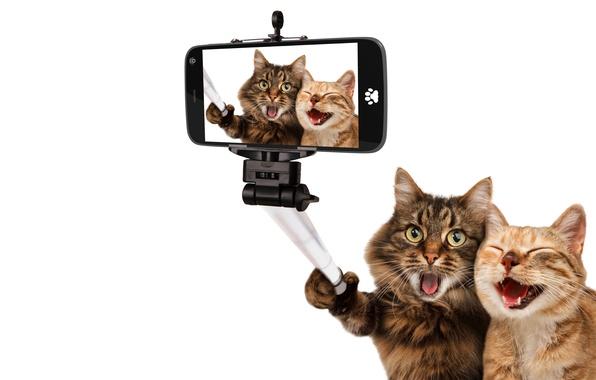 Картинка кошки, радость, фото, коты, юмор, белый фон, снимок, смартфон