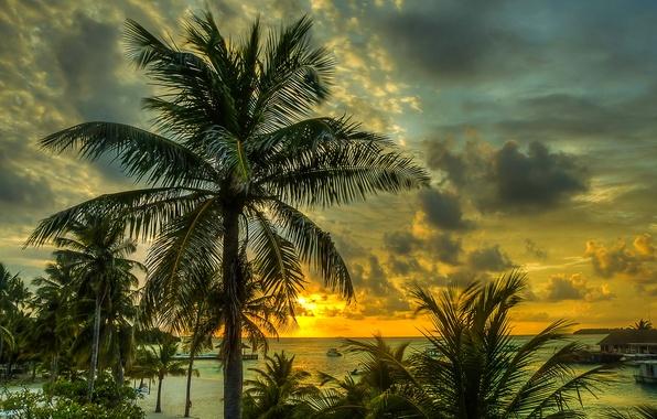 Картинка песок, море, пляж, небо, облака, закат, тропики, пальмы, побережье, Мальдивы