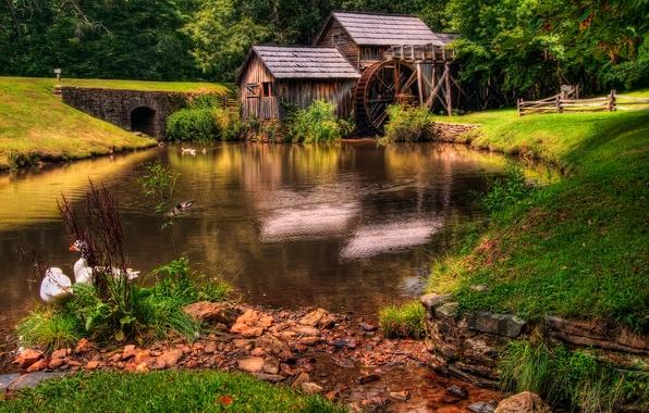 Картинка лес, трава, пейзаж, природа, река, green, старые, colors, hdr, мельницы, grass, красивая, forest, архитектура, зеленая, …