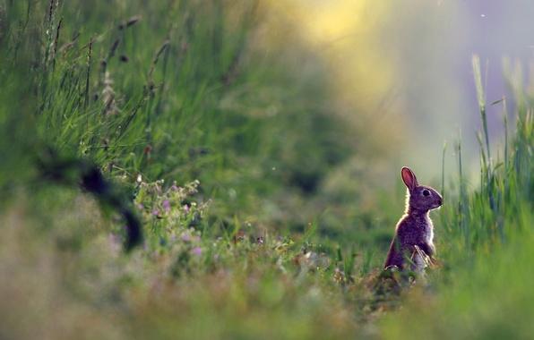 Картинка лето, природа, заяц, растения, травка