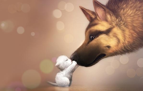 Картинка любовь, нежность, собака, семья, котёнок, dog, kitty, mommy