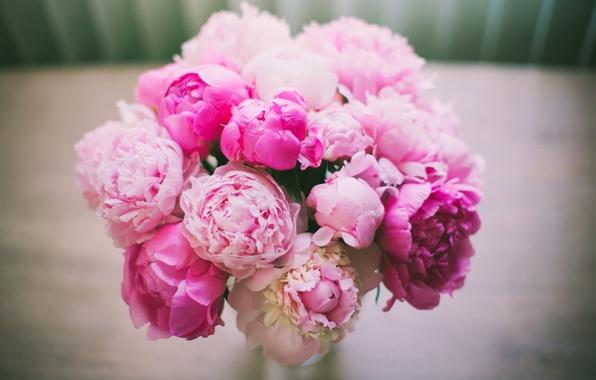 Картинка цветы, букет, лепестки, розовые, Пионы