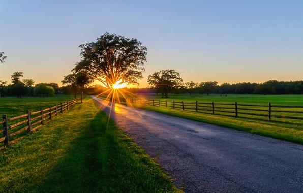 Картинка дорога, лес, лучи, деревья, закат, природа, парк, восход, весна, forest, road, trees, nature, sunset, park, …