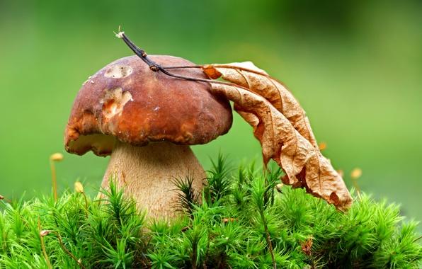 Картинка лист, гриб, мох