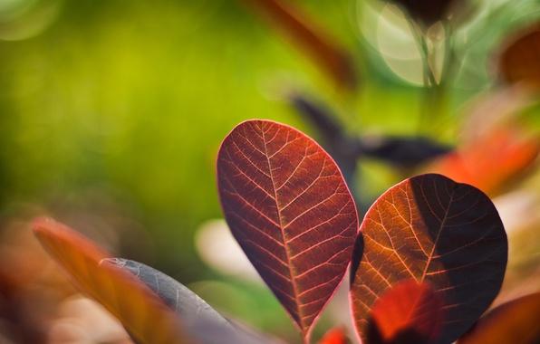 Картинка листья, цвета, макро, природа, фото, фон, обои, яркие, растения