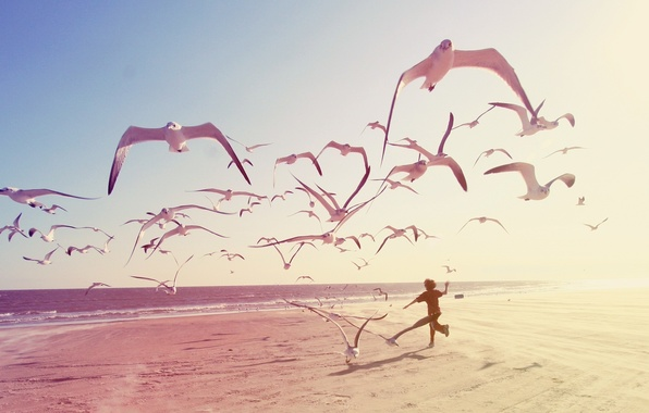 Картинка море, пляж, люди, животное, чайка, мальчик, beach, sea, people, boy, animal, seagull