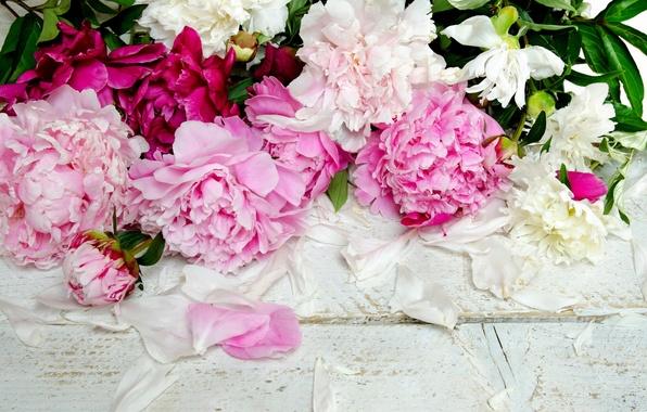 Картинка цветы, лепестки, бутоны, пионы
