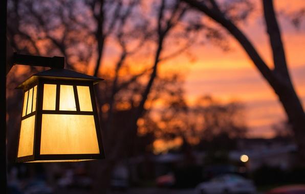 Картинка макро, свет, деревья, закат, желтый, вечер, размытость, фонарь