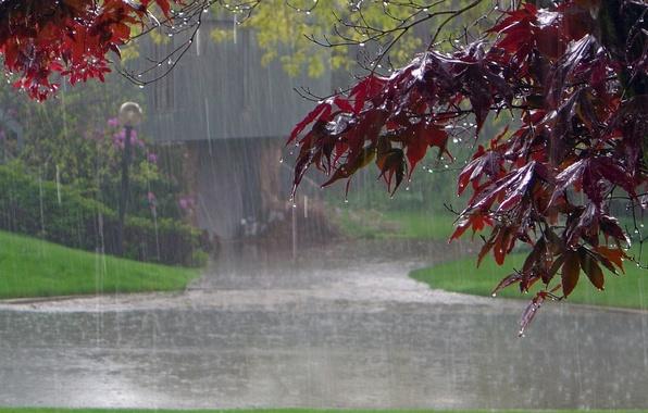 Картинка дорога, листья, дом, парк, дождь, дерево, клен