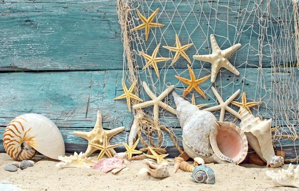 Картинка песок, пляж, дерево, сетка, ракушки, wood, marine, камушки, морские звезды, starfish, net, seashells