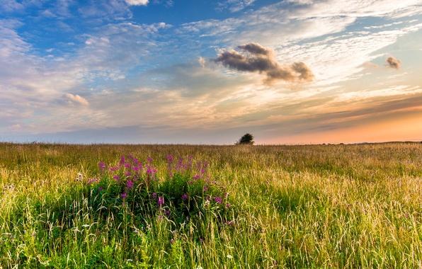 Картинка поле, трава, пейзаж, закат, цветы, природа, Англия, вечер, Великобритания, England, Great Britain, Западный Суссекс, West …