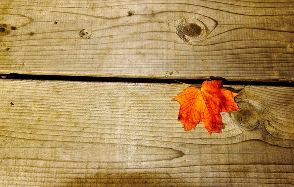 Картинка макро, оранжевый, фон, дерево, widescreen, обои, доски, листик, wallpaper, листочек, широкоформатные, background, полноэкранные, HD wallpapers, …