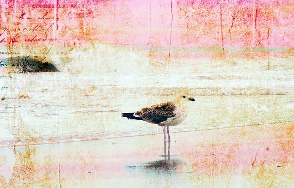 Картинка стиль, фон, птица, текстура