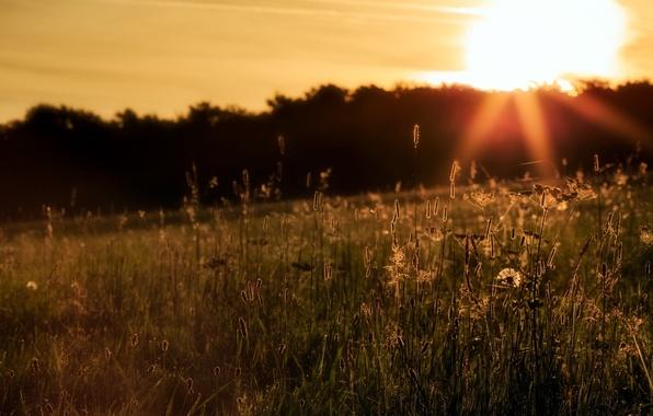 Картинка поле, трава, пейзаж, закат
