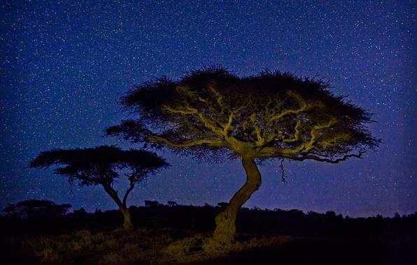 Картинка звезды, свет, ночь, дерево, Африка, акация, Кения, Wildlife Conservancy