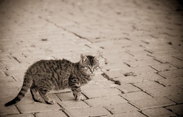 Картинка кошка, котенок, серый, улица, мостовая, в полоску