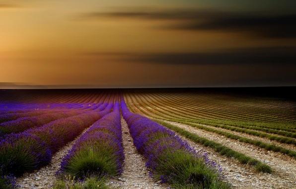 Картинка поле, небо, закат, цветы, природа, Франция, лаванда, Прованс
