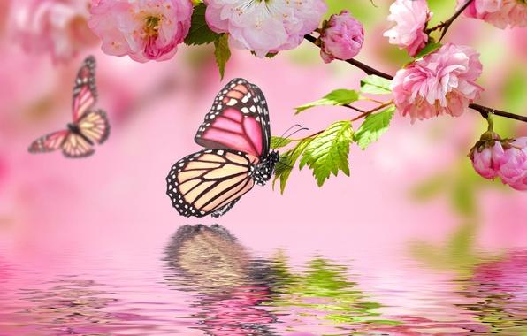 Картинка вода, бабочки, отражение, розовый, весна, цветение, pink, water, blossom, flowers, spring, reflection, butterflies