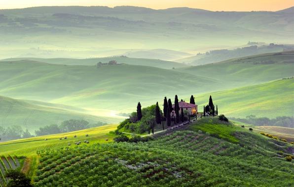 Картинка зелень, деревья, пейзаж, природа, туман, рассвет, холмы, поля, утро, Италия, Italy, Тоскана, Toscana, Пьенца, Pienza, …