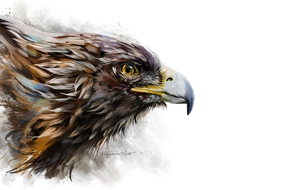 Фото обои фон, арт, птица, клюв, профиль, орел
