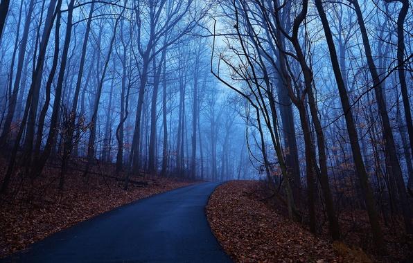 Картинка дорога, осень, листья, деревья, синий, туман, рассвет, утро, Лес