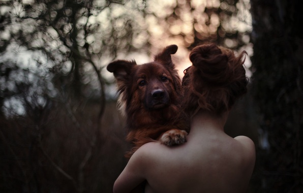 Фото обои girl, love, forest, dog, sundown, bokeh, hair, back, emotion, spine
