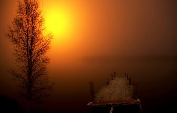 Картинка пейзаж, ночь, мост, туман, дерево