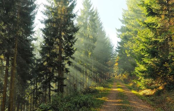 Картинка дорога, осень, лес, свет, природа, человек, утро
